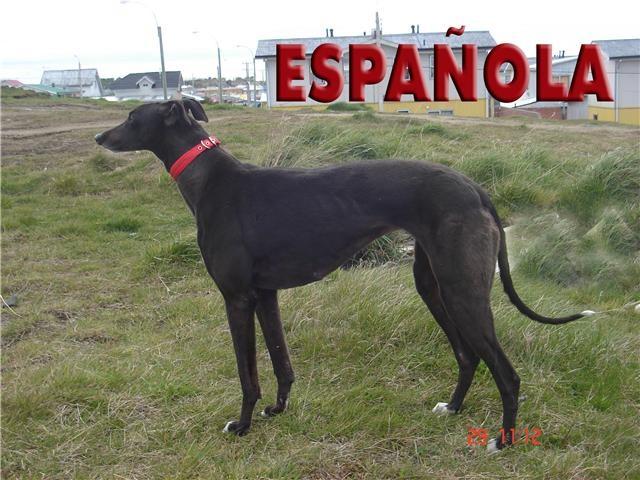 ESPAÑOLA Sin_ta22