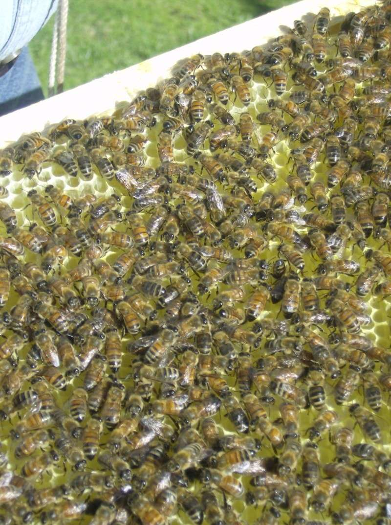 pics from yesterday when we opened the hive. 05_19_12