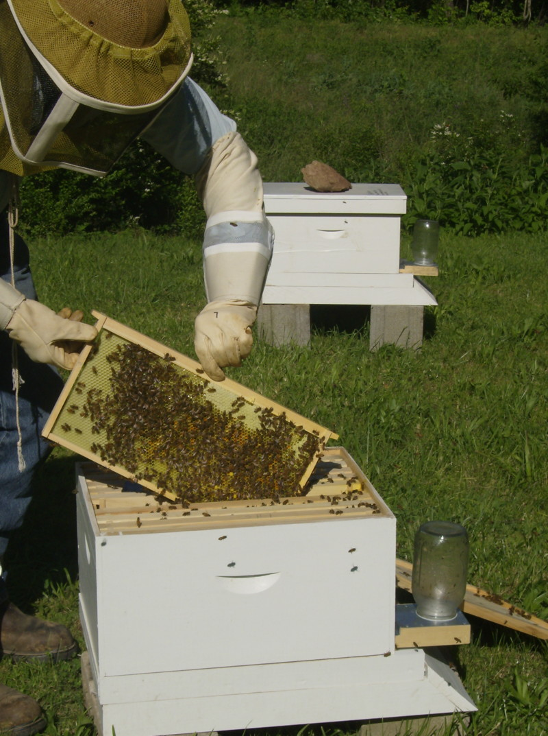 pics from yesterday when we opened the hive. 05_19_13