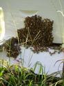 Bearding Bees 08_04_10