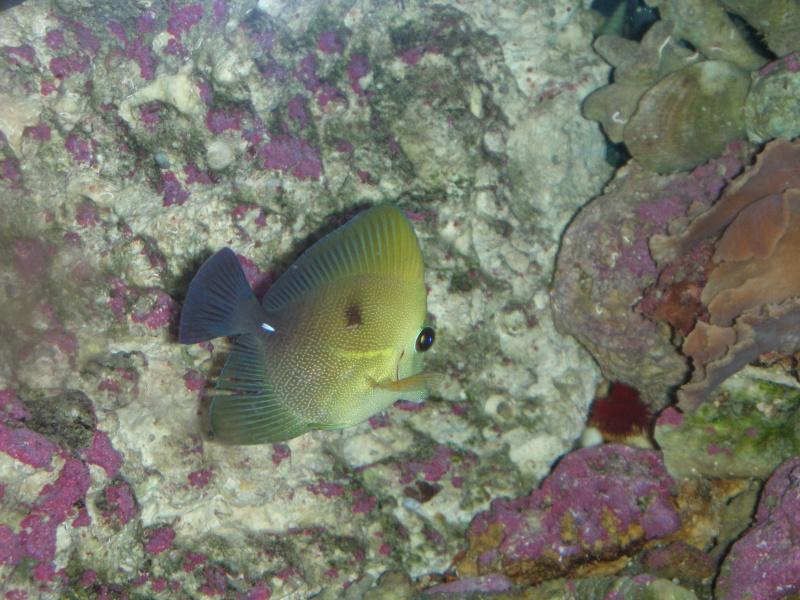 aide combat entre poissons Dscn5917