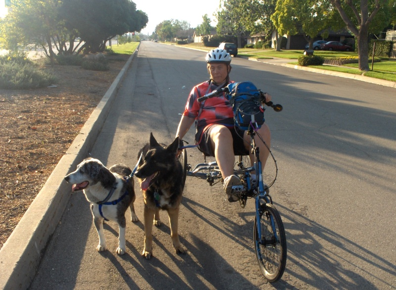 My dogs, my trike and I Hpim2111