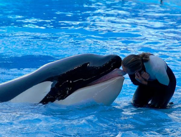 [photo] Comparaisons  impressionnantes orques / humains 00010