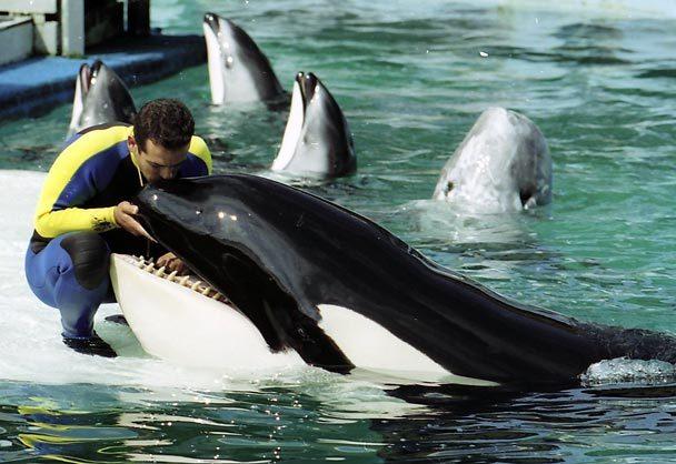 [photo] Comparaisons  impressionnantes orques / humains 20041211