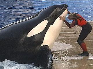 [photo] Comparaisons  impressionnantes orques / humains - Page 3 Tiliku10