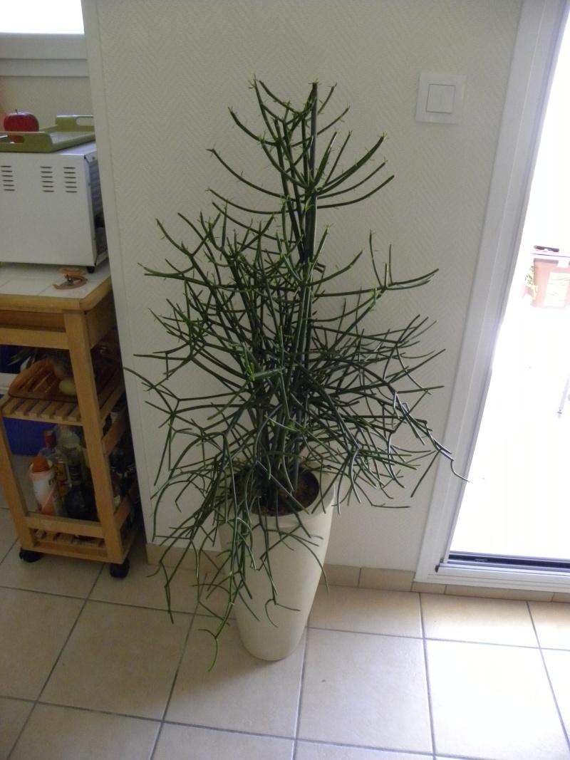 comment s'appelle cette plante Plante12