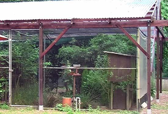 Les plantes de voli re for Oiseau de voliere exterieur
