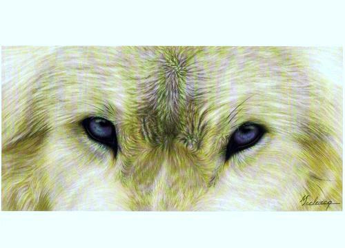 regard de louve Regard10