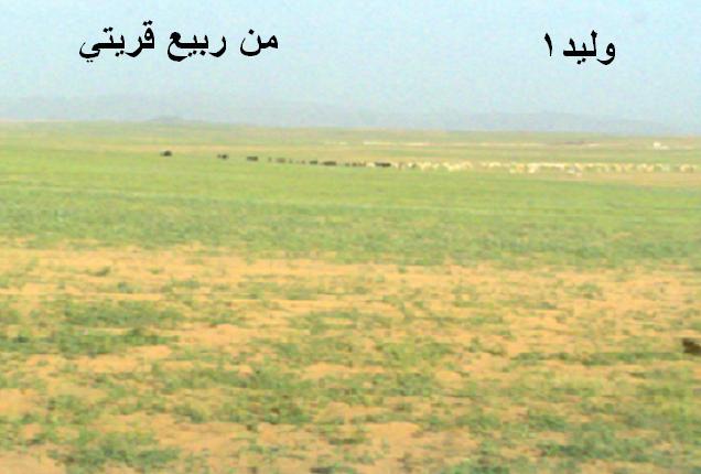 المتابعة اليومية للطقس في العالم العربي من 16 / 8 / وحتى 19 / 8 / 2009 م 111