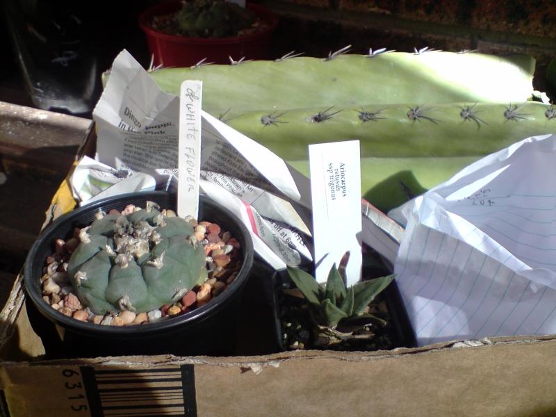 my new cacti P3007010