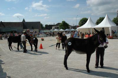 Foire  aux Mules  et aux Ânes  Lundi de Pentecôte: lundi 25 mai 2010 Anefoi10