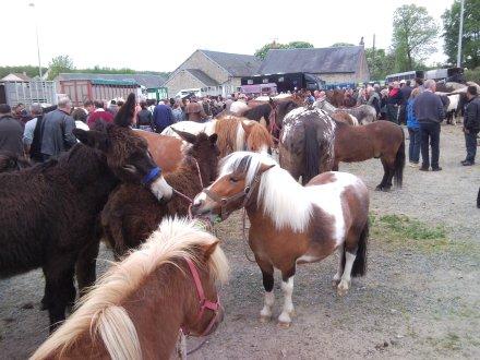 chénérailles(23) foires aux chevaux 2eme dimanche d'octobre et 2eme dimanche de mai de chaque année Chener11