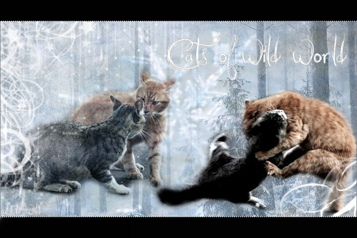 Cats of wild world