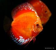 قسم الاسماك