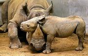 قسم الحيوانات المنقرضه والمهدده بالانقراض