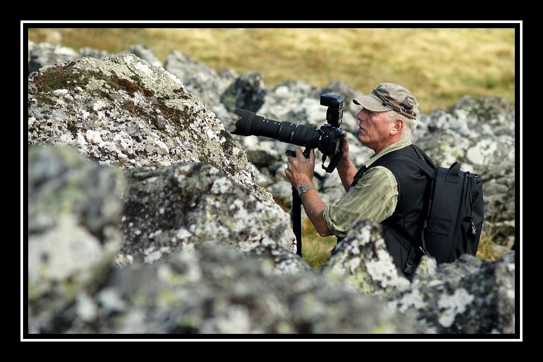 Des marmottes en Auvergne ? Racoon10