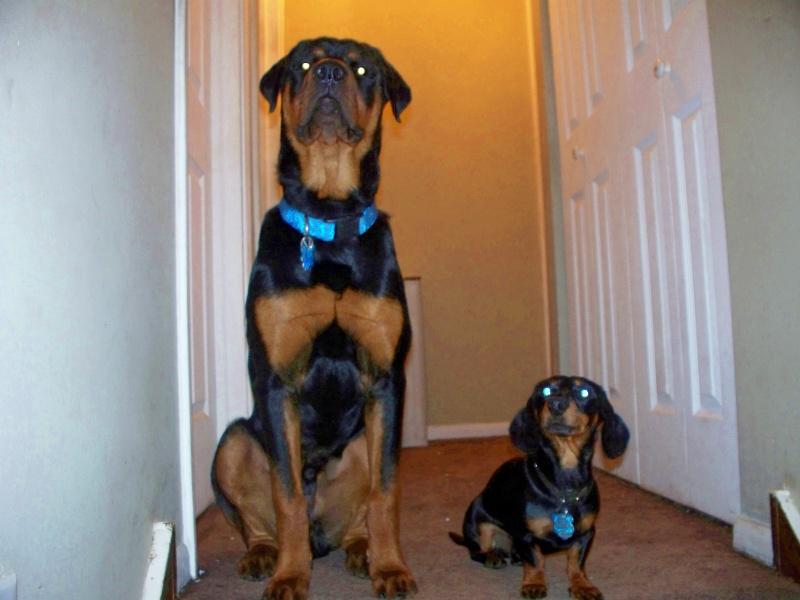 My dogs 100_5035