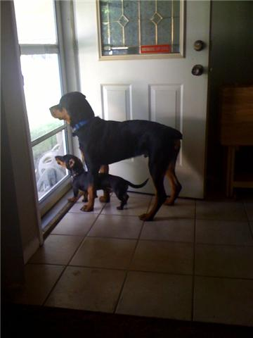 My dogs Getatt10