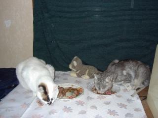 Témoignage  retour du chat Repas_10
