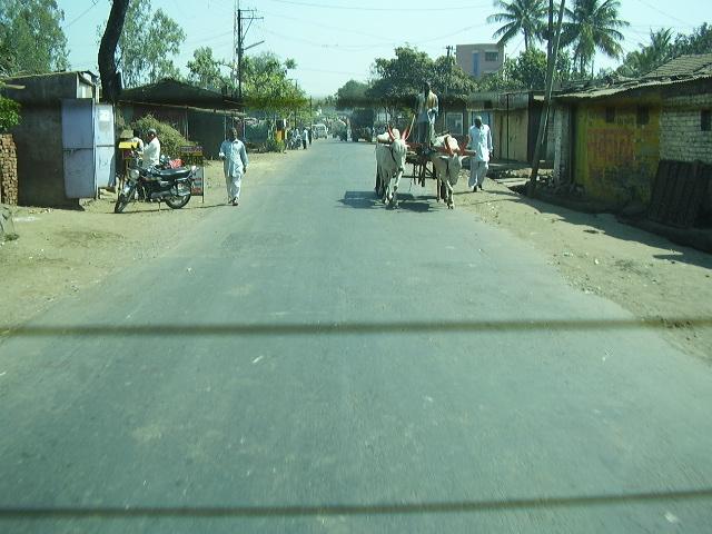 India Livestock P1230511