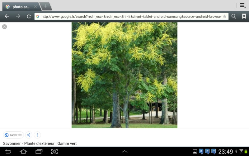 Qu el est cet arbre? Savonnier, arbre aux lanternes,  20180714