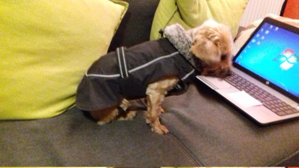 manteau Hurrta pro petit chien 10€ 20200111