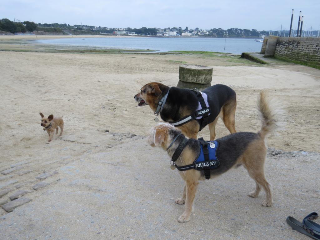 Nos bons plans vacances (Hotel ou autres) avec nos chiens ! - Page 3 Img_3615