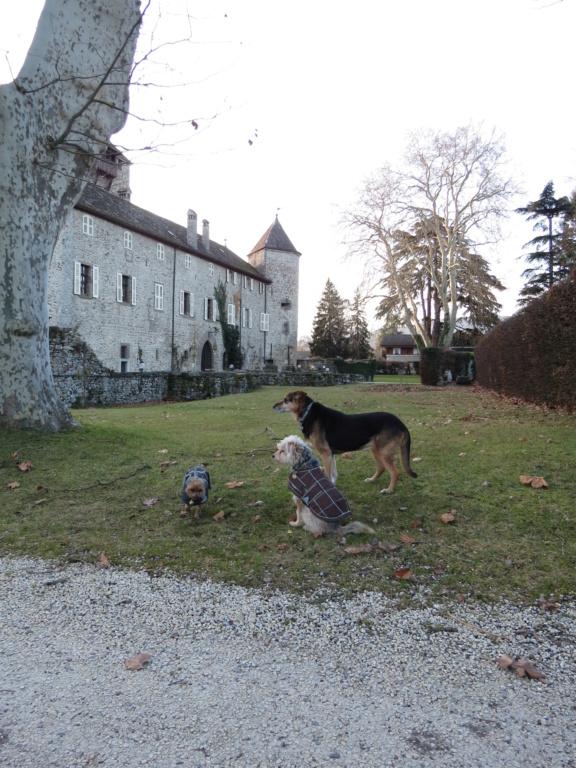 Nos bons plans vacances (Hotel ou autres) avec nos chiens ! - Page 4 Img_4223