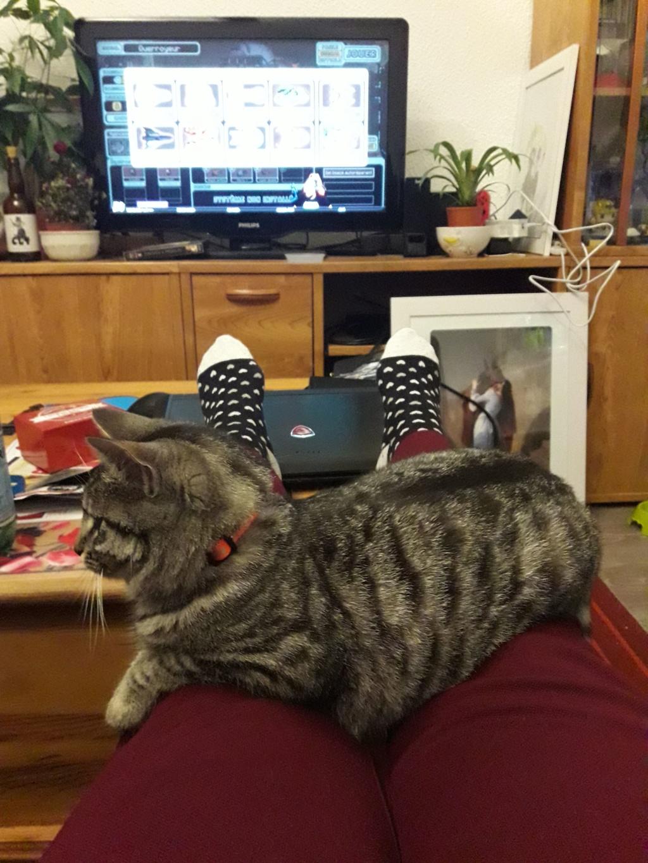 Perdue Odessa chatte grise tigrée pucée et stérilisée (Chambéry - 73) RETROUVÉE   Odessa11