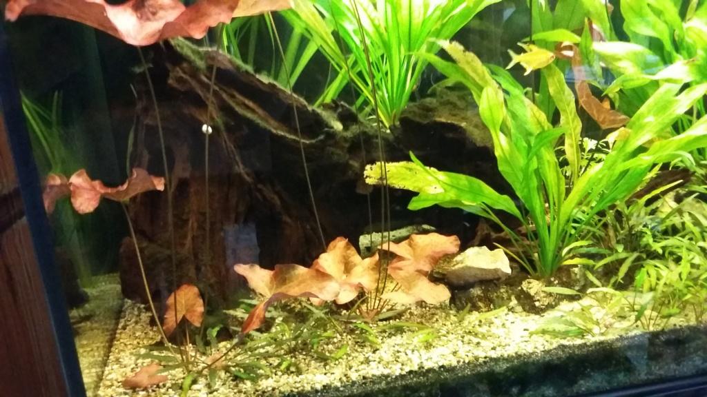 mes aquariums 20171011