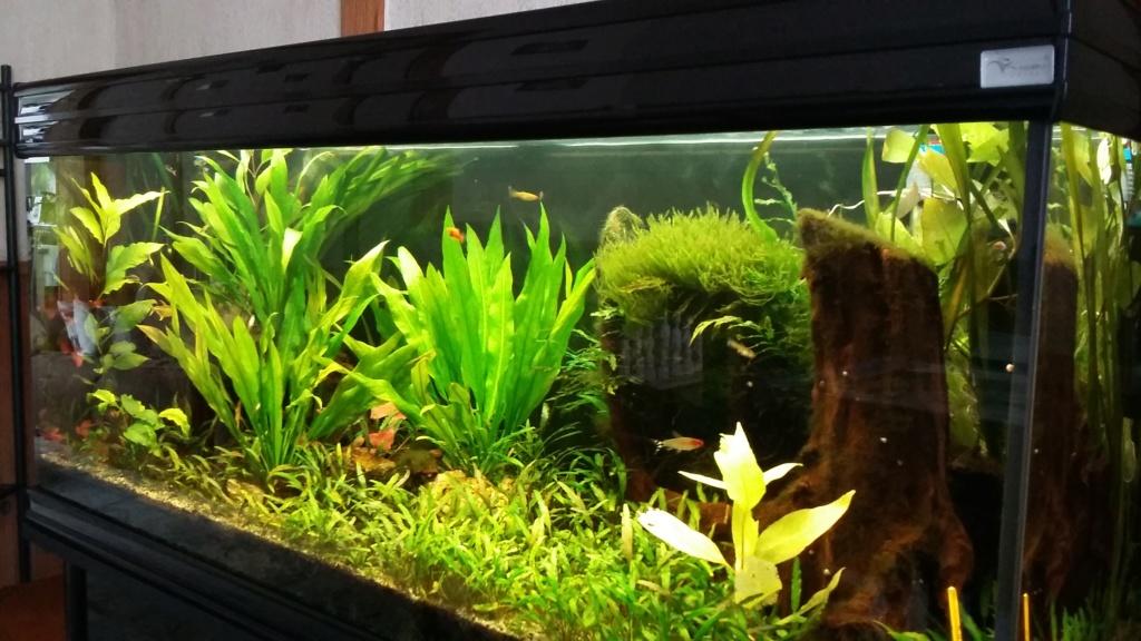 plantes qui deviennent jaunes et algues sur vitre 20181011