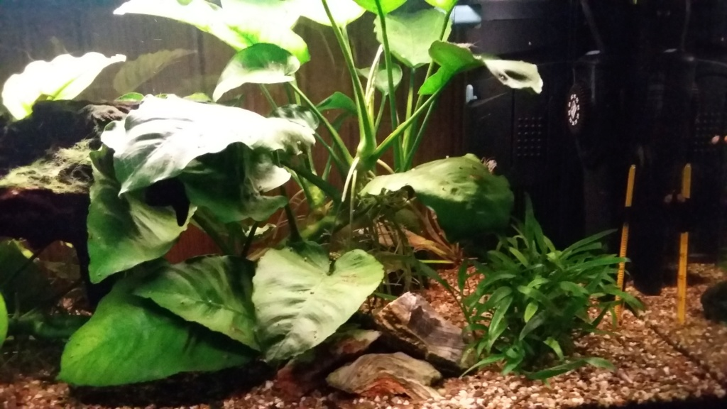 mes aquariums 20181028