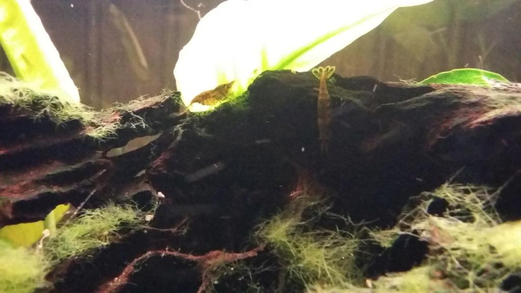mes aquariums 20181030