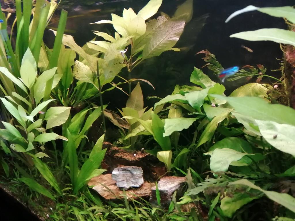 Démarrage aquarium  Img_2055
