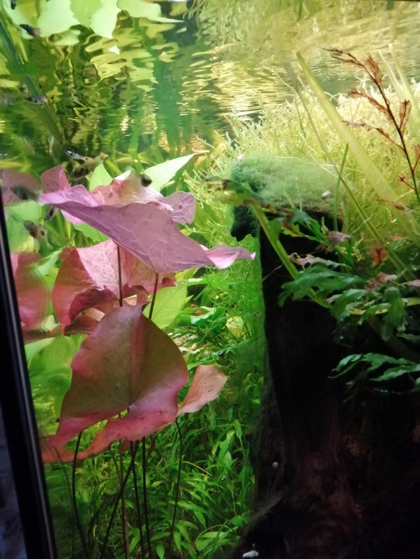 Démarrage aquarium  Img_2056