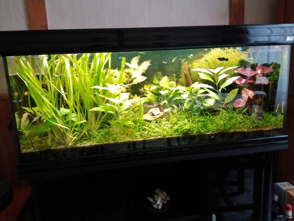 mes aquariums Img_2065