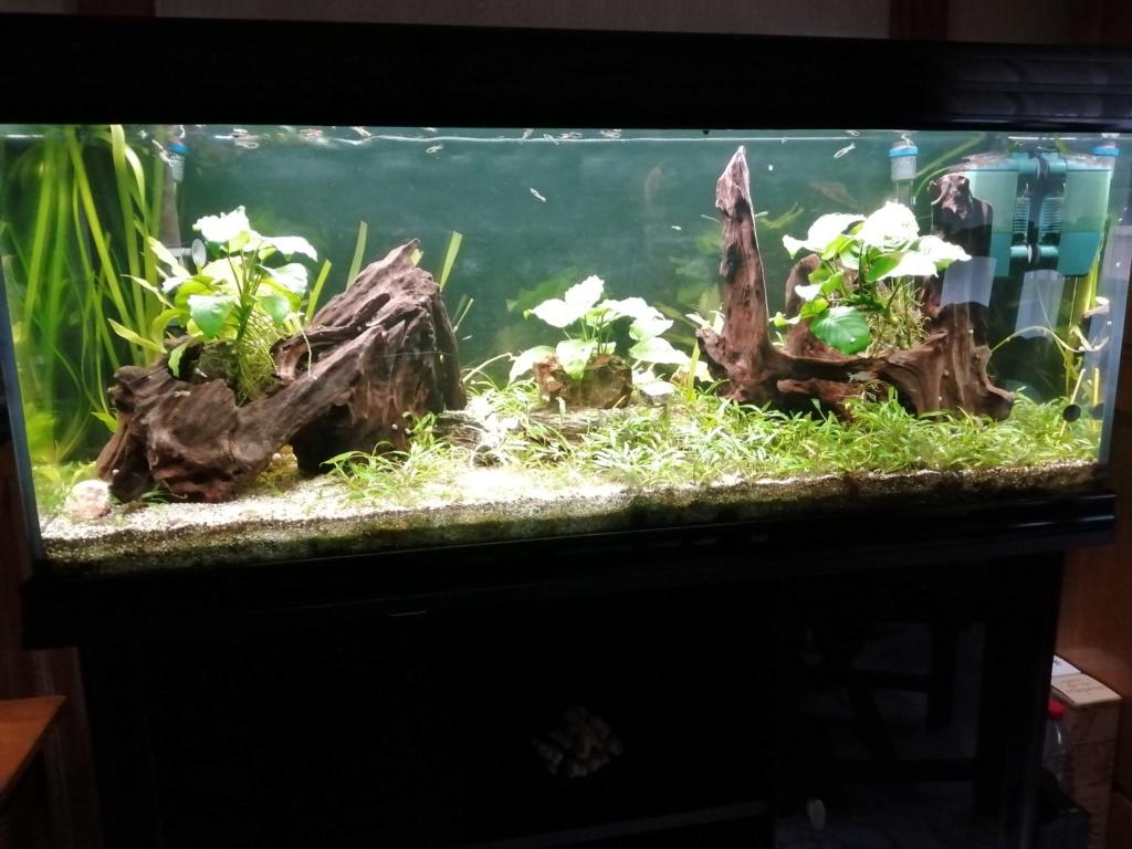 mes aquariums Img_2066