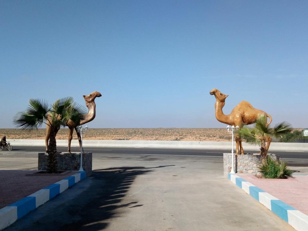 "[Maroc Camp/Découverte]  Futur camping ""Riad Maissa"" à Tiznit P9012912"