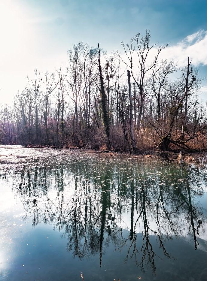 Reflets dans la forêt du Rhin... Reflet10