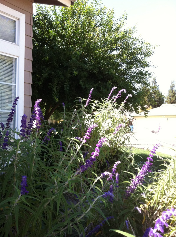 Butterfly/Pollinator Havens - Which plants are your favorite to cultivate? - Page 4 10-03-10