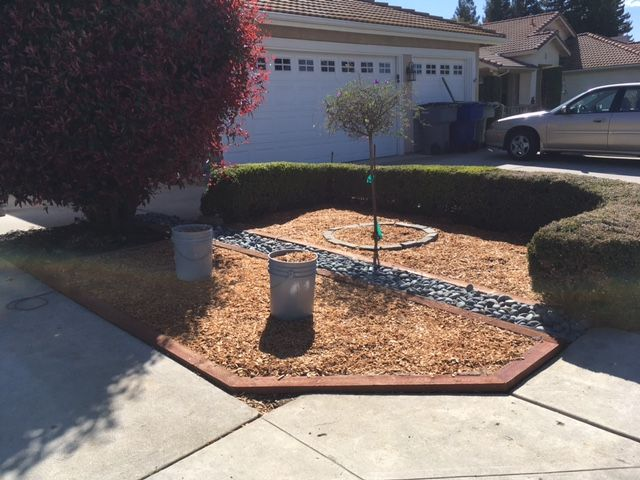 Sanderson's Urban SFG in Fresno, California - Page 8 2021_c10