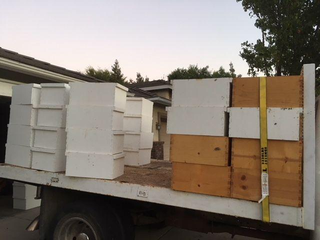 Keeping bees - Page 37 Bee_hi10