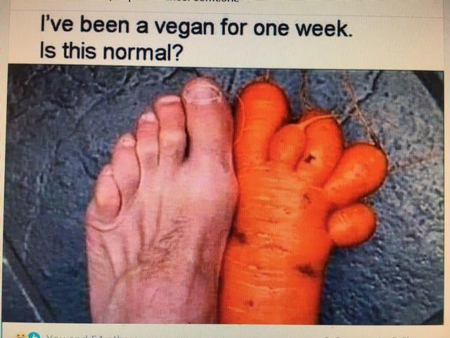 Senseless Banter... - Page 34 Carrot12
