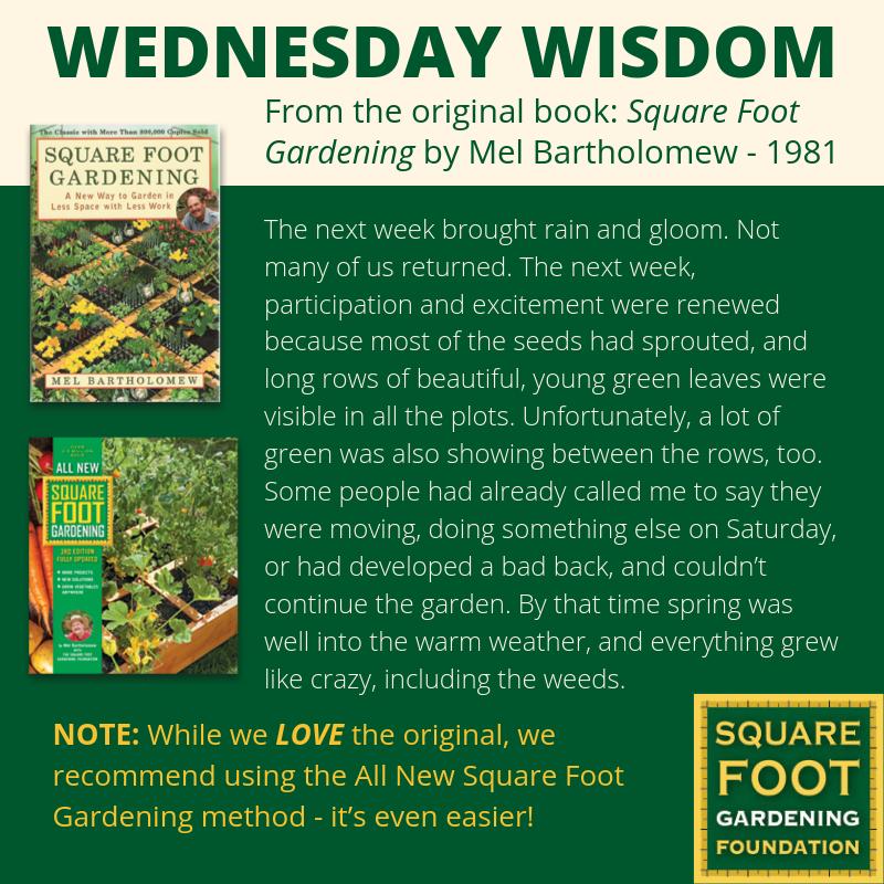 Wednesday Wisdom - SFG Foundation Founda15