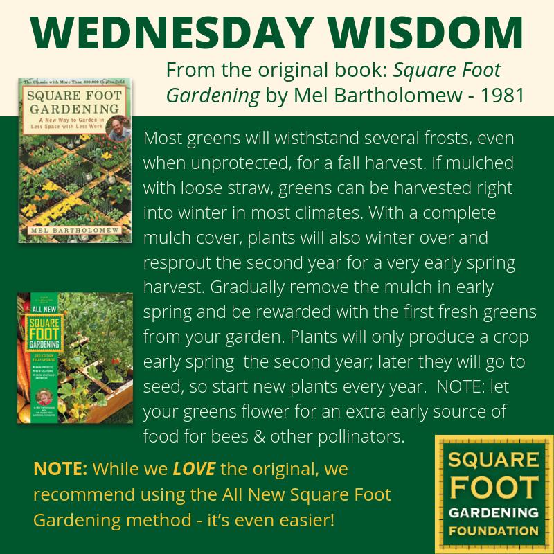 Wednesday Wisdom - SFG Foundation Founda21