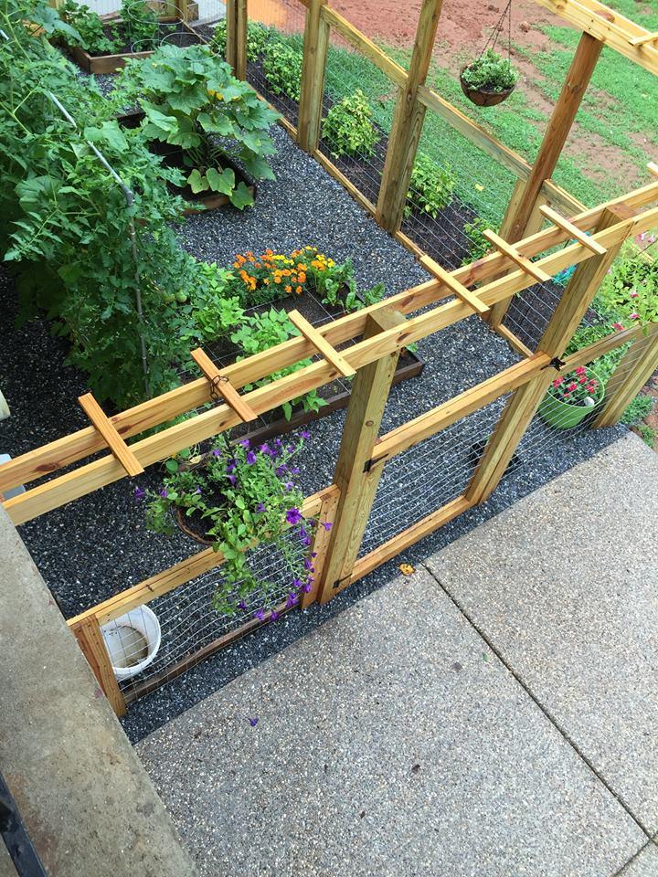 Plants are still being eaten... Garden14