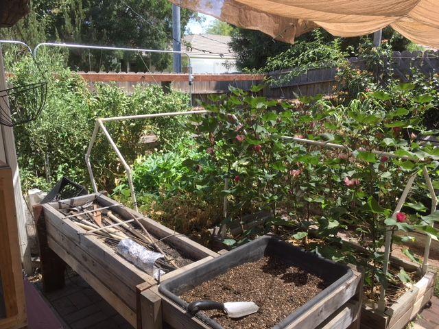 Sanderson's Urban SFG in Fresno, California - Page 4 Garden16