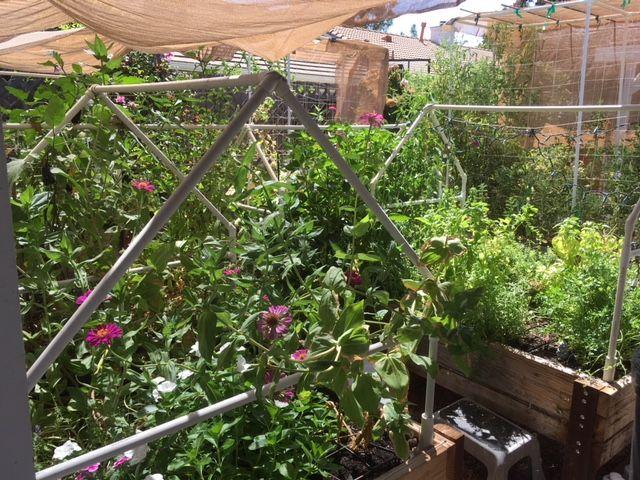 Sanderson's Urban SFG in Fresno, California - Page 4 Garden17