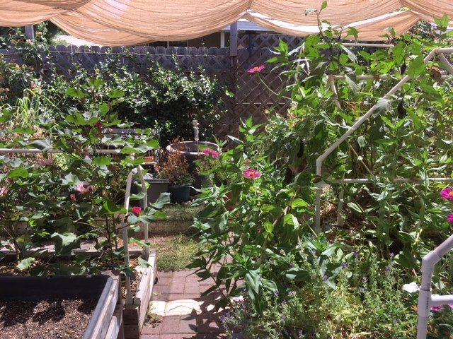 Sanderson's Urban SFG in Fresno, California - Page 4 Garden18