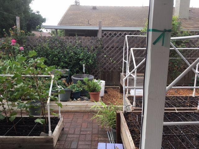 Sanderson's Urban SFG in Fresno, California - Page 5 Garden21